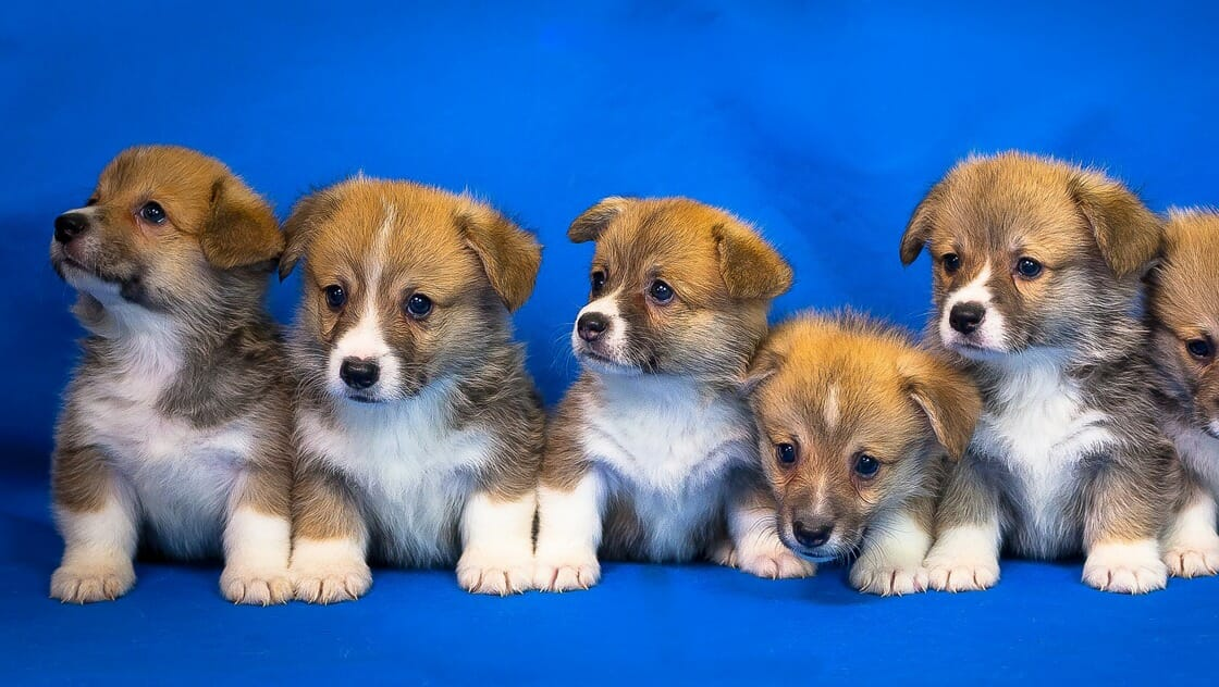 中型犬の犬種一覧