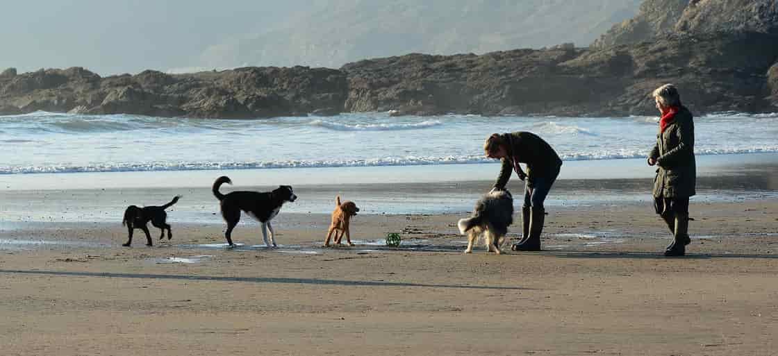 大型犬の【犬年齢早見表】(ラブラドールレトリバーなど)