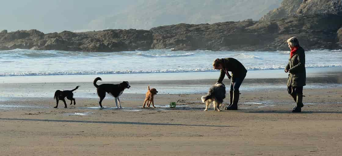 超大型犬の【犬年齢早見表】(セント・バーナード)